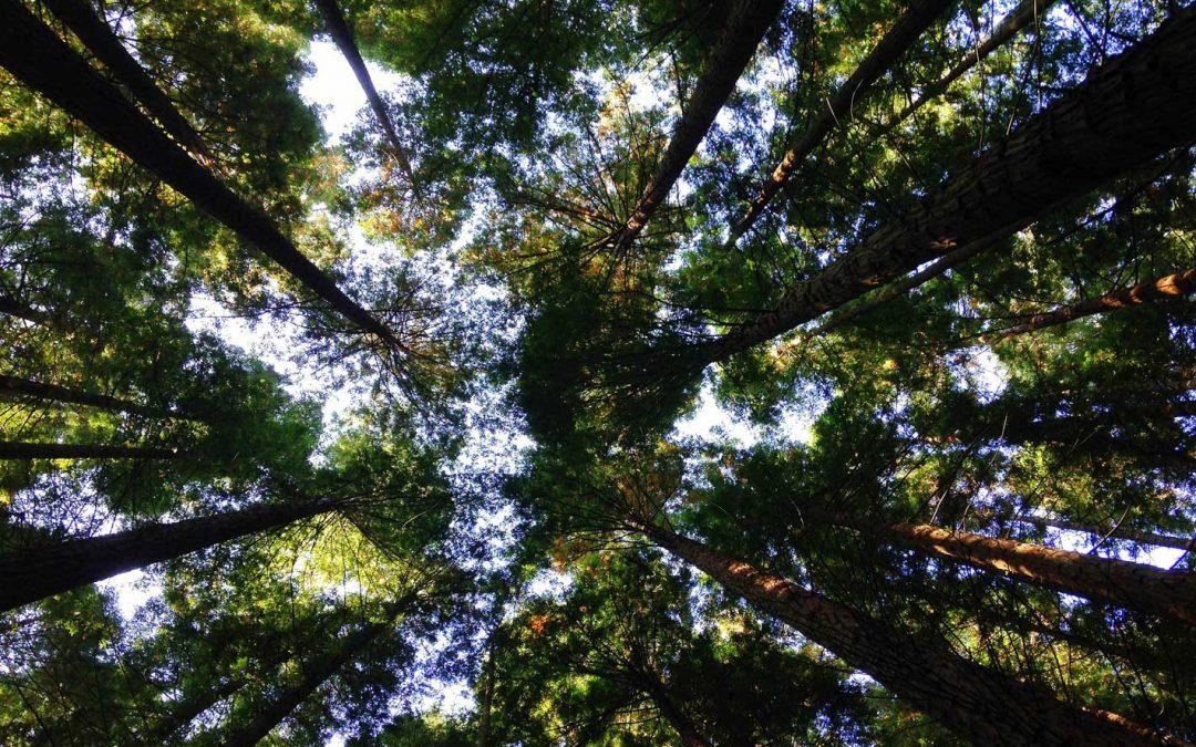 GarantieGevels neemt duurzaamheid vanaf de start serieus!